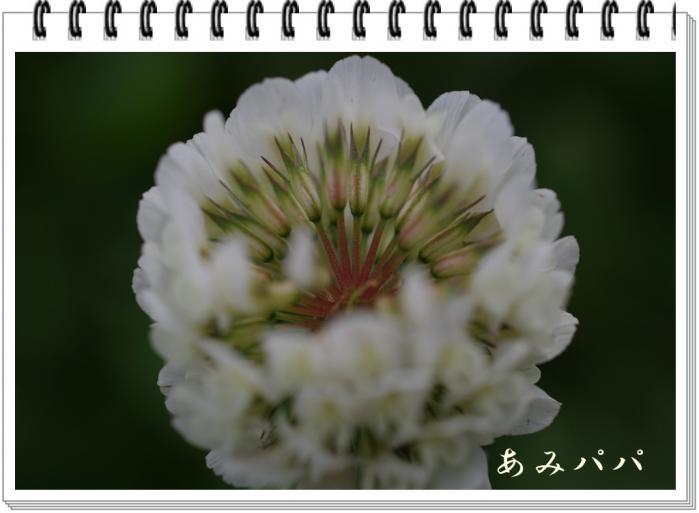 kinnjyoo (11)