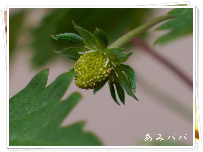 ichigonono (6)