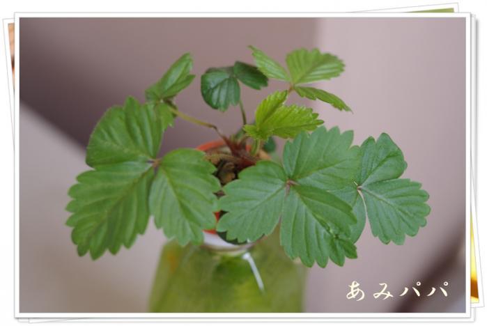 ichigonono (2)