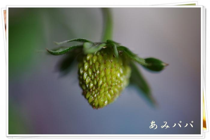 ichigonono (9)