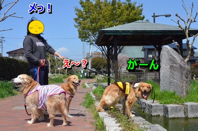 DSC_0414 (2)