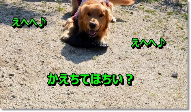 DSC_0003_20130412205740.jpg