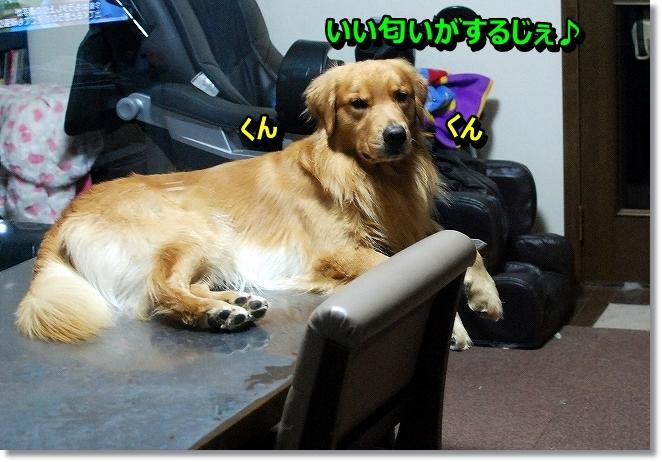 DSC_0004_2013110318072290b.jpg
