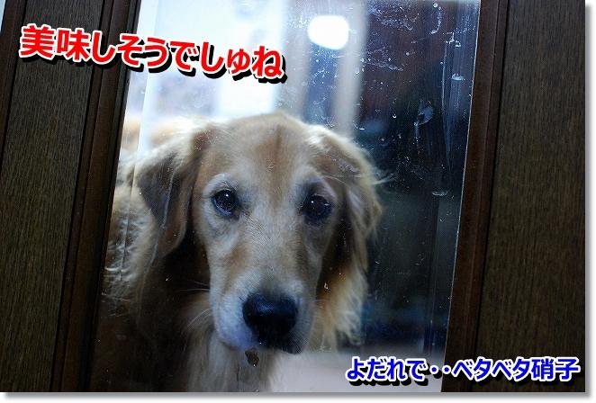 DSC_0007_2013110318072379c.jpg