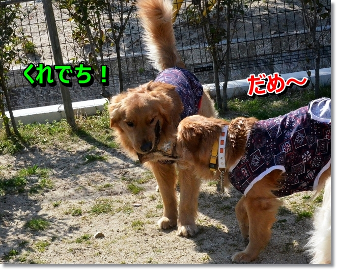 DSC_0008_20130412205744.jpg