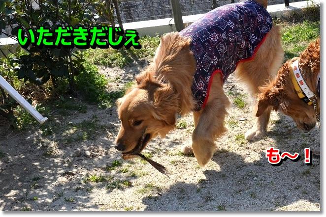 DSC_0010_20130412205757.jpg
