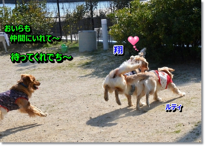 DSC_0013_20130412205759.jpg