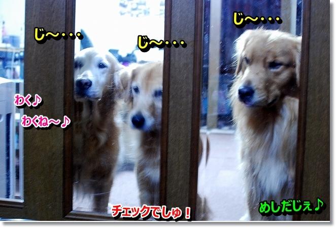 DSC_0023_201311031807509b2.jpg