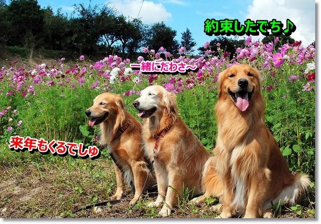 DSC_0062_2013102100044158f.jpg