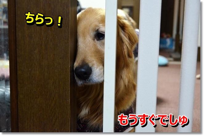 DSC_0164_20130416005220.jpg