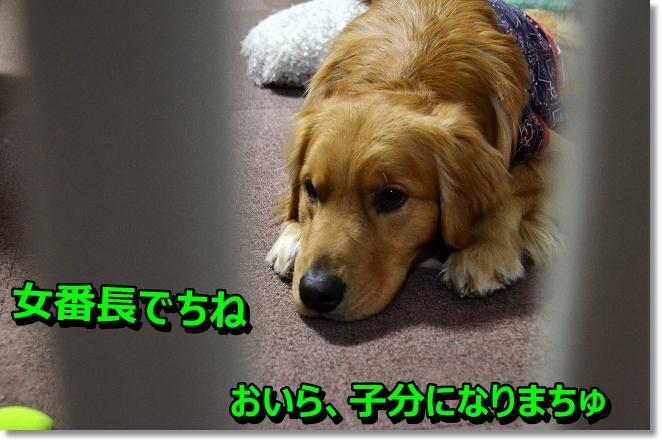 DSC_0173_20130416005247.jpg