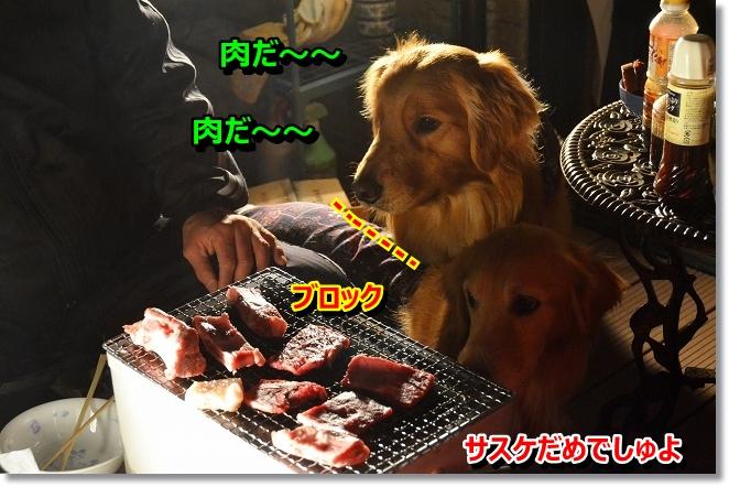 DSC_0183_20130410204627.jpg
