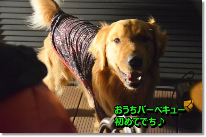 DSC_0186_20130410204631.jpg