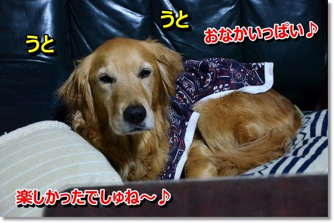 DSC_0270_20130410204736.jpg
