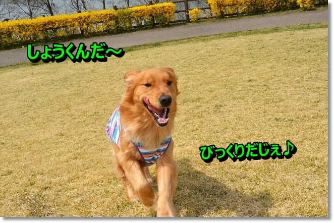 DSC_0292_20130404004923.jpg