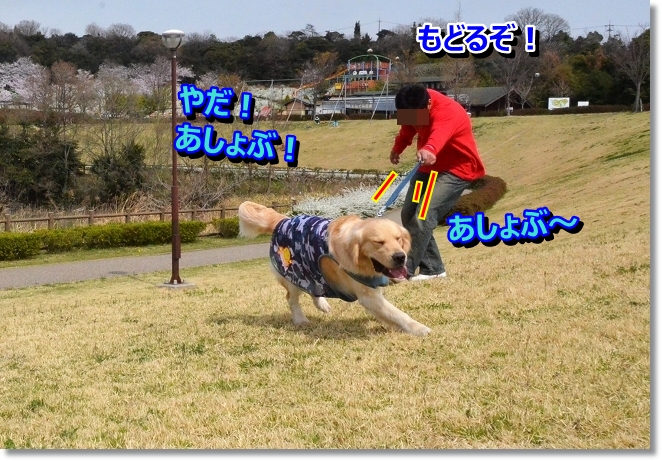 DSC_0309_20130404004927.jpg