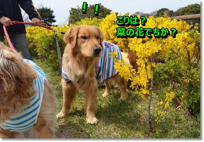 DSC_0319_20130404004943.jpg