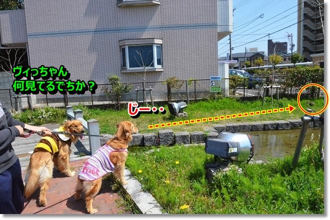 DSC_0419_20130412004324.jpg