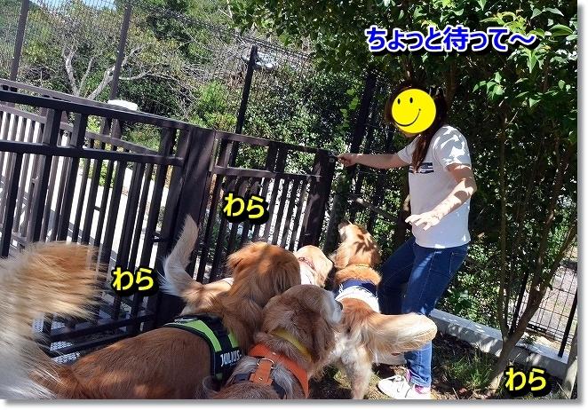 DSC_0446_20131022075402b81.jpg