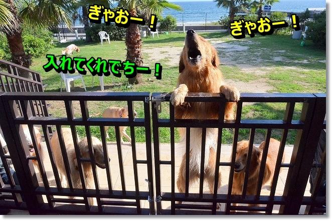 DSC_0466_20131022075506dcf.jpg