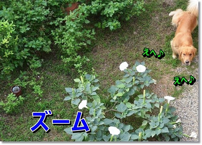 DSC_0578_2013092918145456d.jpg