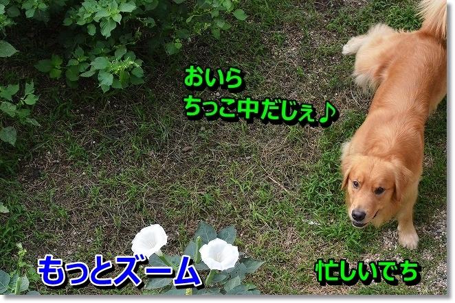DSC_0579_20130929181547f6c.jpg