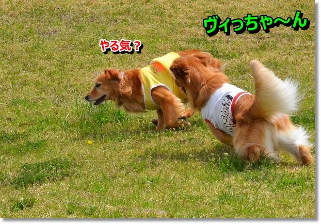 DSC_0605_20130427010048.jpg