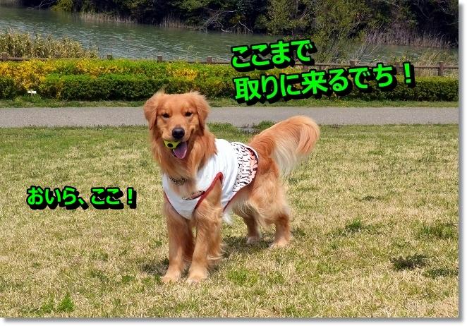 DSC_0613_20130427010051.jpg