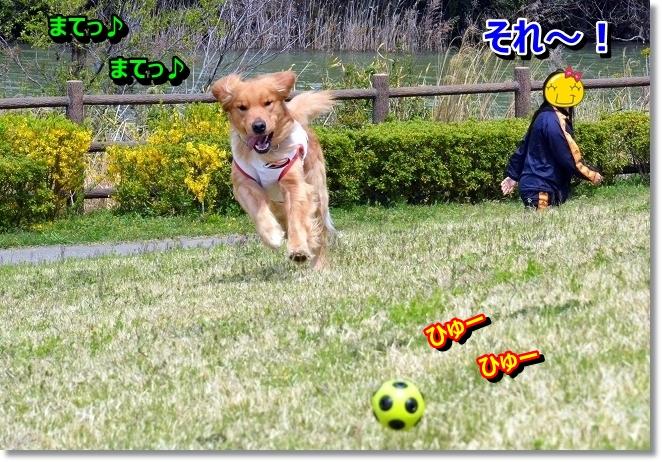 DSC_0631_20130427010115.jpg