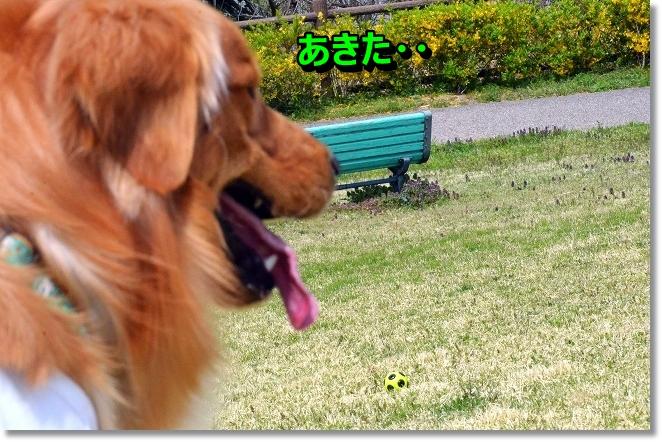 DSC_0640_20130427010118.jpg