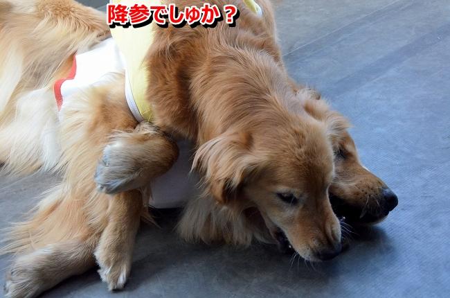 DSC_0664_20130418012536.jpg