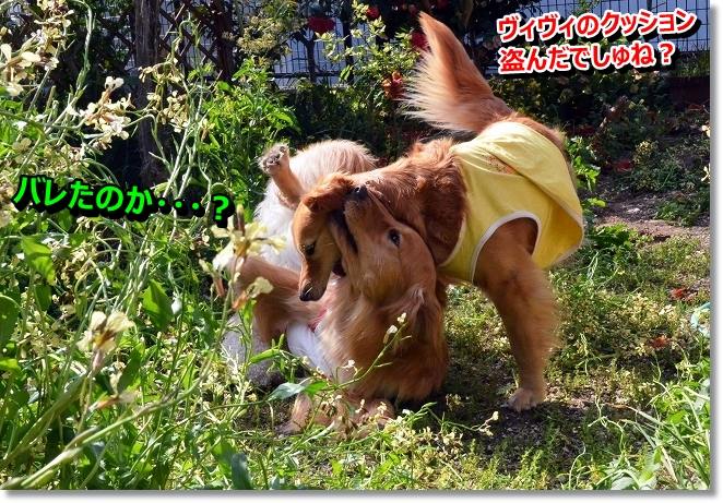 DSC_0671_20130418212845.jpg
