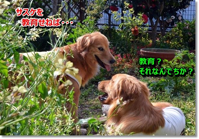 DSC_0672_20130418213039.jpg