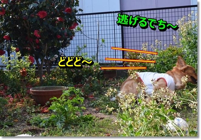 DSC_0673_20130418213203.jpg