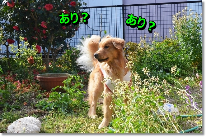DSC_0677_20130418213201.jpg