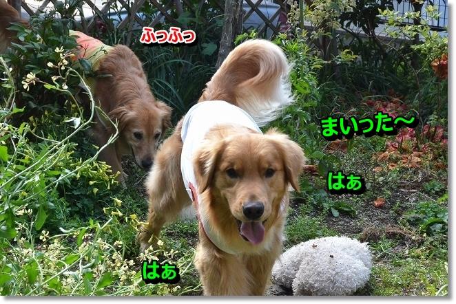 DSC_0690_20130418213401.jpg