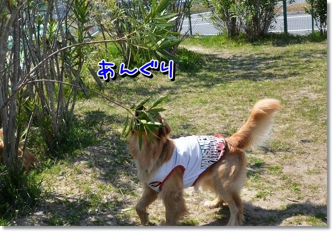 DSC_0764_20130415103739.jpg