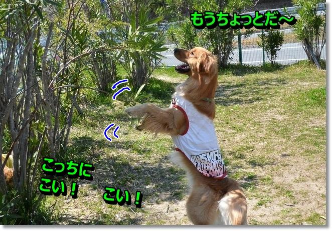DSC_0767_20130415103740.jpg