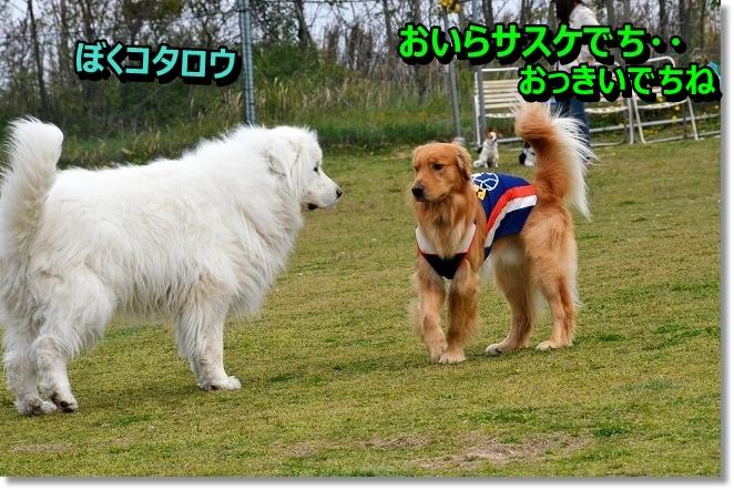 DSC_0819_20130420002655.jpg