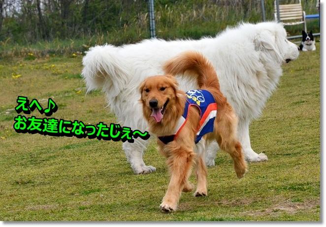 DSC_0820_20130420002655.jpg