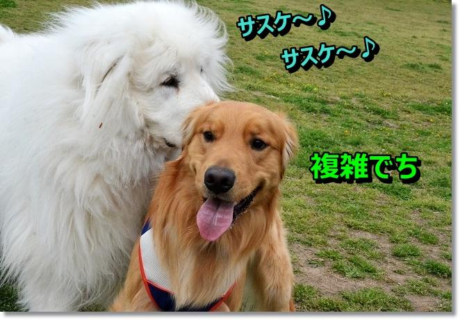 DSC_0839_20130420002951.jpg