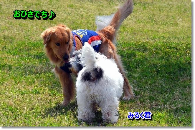 DSC_0960_20130430232352.jpg