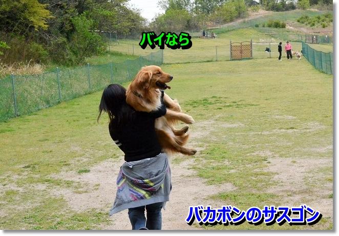 DSC_1172_20130424102702.jpg