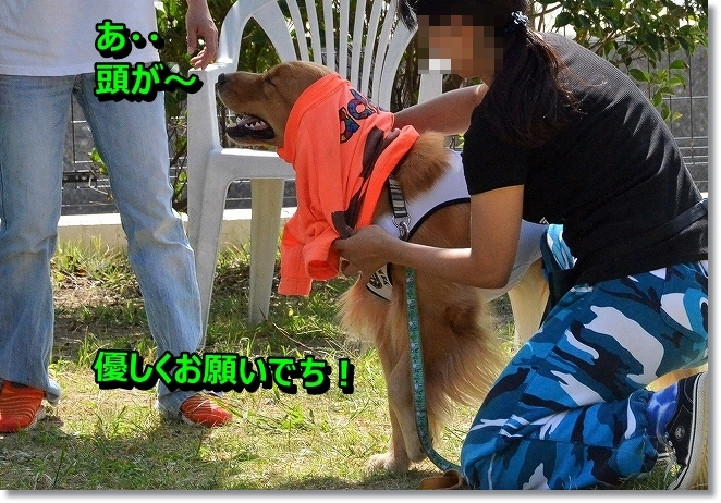 DSC_1266_20131002094445319.jpg