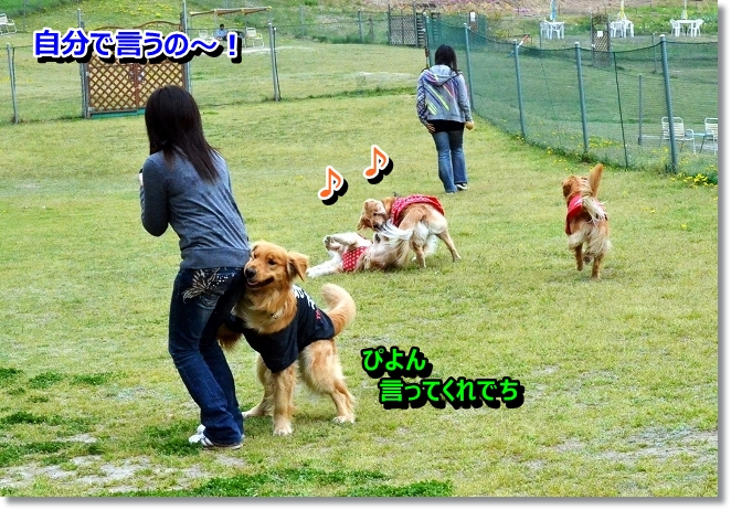 DSC_1299_20130430005921.jpg
