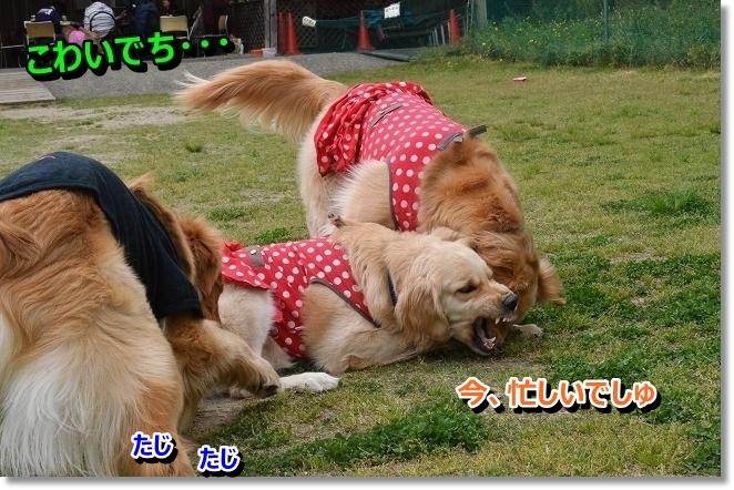 DSC_1325_20130430010004.jpg
