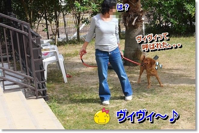 DSC_1985_201310110942262de.jpg