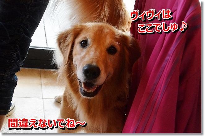 DSC_1989_20131011094311386.jpg