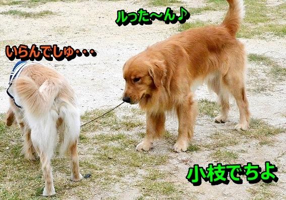 DSC_2006_20131012120626a8d.jpg