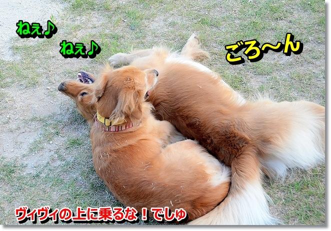 DSC_2072_20131012194146956.jpg